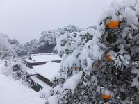雪と色彩 - アオモジノキモチ