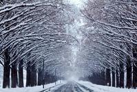 風雪 - まっちゃんのPHOTOブログ