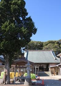 1/12(金)の買い物と食事・相浜亭 - さとごころ