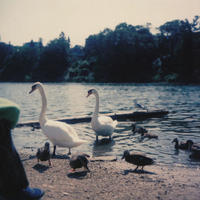 Swan - ∞ infinity ∞