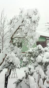 20180112 【大雪】朝から降り続いて - 杉本敏宏のつれづれなるままに