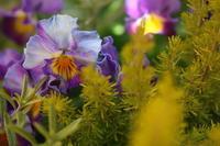 寄せ植えの勘違い - CHIROのお庭しごと
