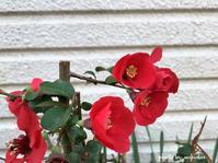 散歩道の花をアイフォンで撮影して - 自然のキャンバス