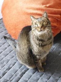 猫のお留守番 ララちゃん編。 - ゆきねこ猫家族