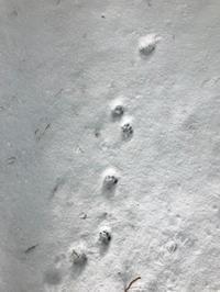 積雪3日目 不思議な足あと🐾 - azukki的.