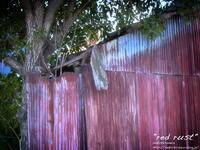 """""""red rust"""" - ~まきち写真工房~"""