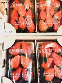 横田農園さんのイチゴ始まってます! - さにべるスタッフblog     -Sunny Day's Garden-