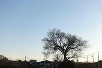 夕方お散歩 - TACOSの野鳥日記