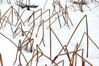 ハス池の幾何学模様 - 丹馬のきょうの1枚