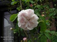 Una llega otra se va - Gardener*s Diary