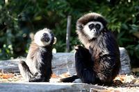 そっくりな父と子 - 動物園放浪記
