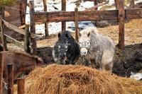 馬、です。……釧路旅行拾遺(1) - Taro's Photo