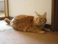 猫のお留守番 タマラちゃん編。 - ゆきねこ猫家族