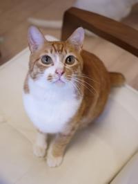猫のお留守番 チャイくん編。 - ゆきねこ猫家族
