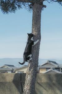 猫のいる風景 2 - 気ままにお散歩