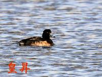小さな池で白い鳥と、ゲエゲエと鳴く鳥がとてもウルサイので、ゆっくり休めません、丸いものが多くてやだね。 - 皇 昇