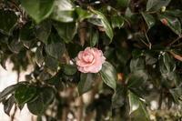ライカQで庭の花を撮る - 2005年~2018年デジタルカメラ百台撮り比べ