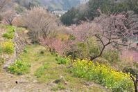 春のことをおもって - お花びより