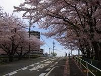 桜の頃 - Day by  day