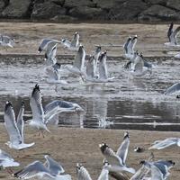 河口の鳥たち2018 - 好日晴天.ほんじつはせいてん