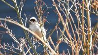 高尾山 1/14 - 山と鳥を愛するアナパパ