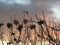 冬の枝 - Jcotton日記