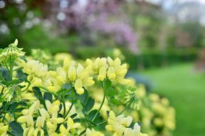 今は?明るい我が家です…我が家のマイケルに大爆笑〜 - 薔薇好き花好き〜元英国在住・アートセラピストが造る癒しの庭