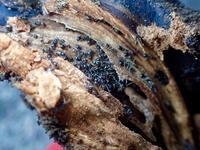 天地返し、冬の巣(蟻、地蜘蛛) - 世話要らずの庭