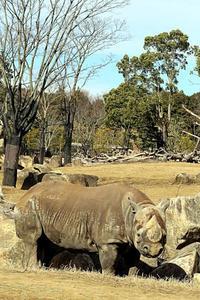 暖かな冬のアフリカのサバンナ@ズーラシア - 動物園放浪記