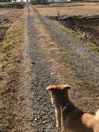 不思議な現象 - 犬との穏やかな日々