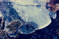 凍てつく - 糸巻きパレットガーデン
