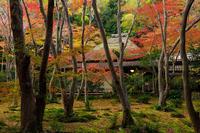 京都の紅葉2017 彩りの祇王寺 - 花景色-K.W.C. PhotoBlog