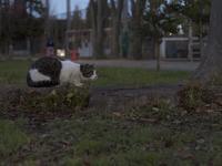 日没は猫時間始まりのサイン - かげたろうの写楽