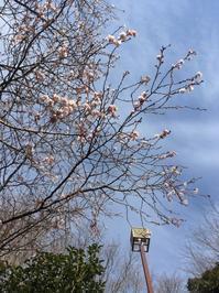 冬桜^_^v - ~おざなりholiday's^^v~ <フィルムカメラの写真のブログ>