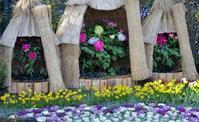 あしかがフラワーパークの冬咲き牡丹 - 季節の風を追いかけて