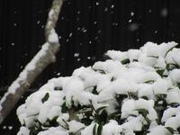 雪 - るーちゃん日々雑感