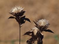 『オケラ3種と・・・・・♪』 - 自然風の自然風だより