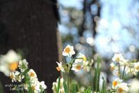 冬に咲く - ある日の足跡