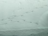 大波〜小波のオオナミ - 幾星霜Ⅱ