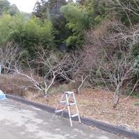 落ち葉とウド - HANA 花♪菜園日記