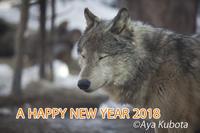 2018年もよろしくお願いします - 北の森から