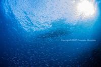 光と群れ - Diving Life ~Aita pe'a pe'a~