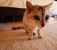 モン様、復活散歩 - ご機嫌元氣 猫の森公式ブログ