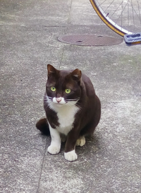シイタケ猫 - いぬのおなら