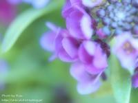 平和な金曜日 - Risaのフォトログ
