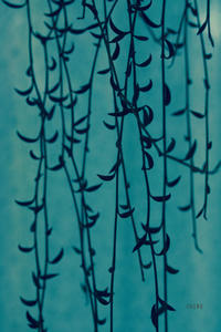 寒波がきて - CHIROのお庭しごと