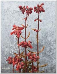 【814】南の島で見た植物ーーーはからめ - Yamyam町一丁目