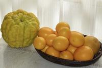 柑橘類3種類の贈り物 - 光さんの日常