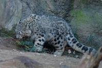 草刈りフク坊とミミへの攻撃 - 動物園に嵌り中