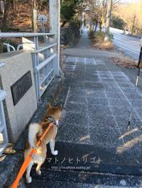 犬と猿 - yamatoのひとりごと
